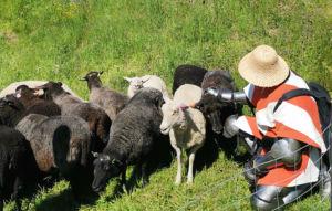 ritari silittämässä lampaita Hämeen linnan vallirinteillä