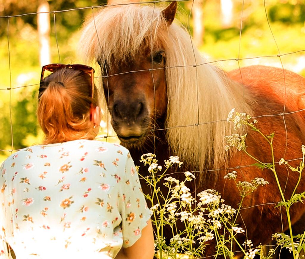 Nuori nainen syöttää ponille heinää.