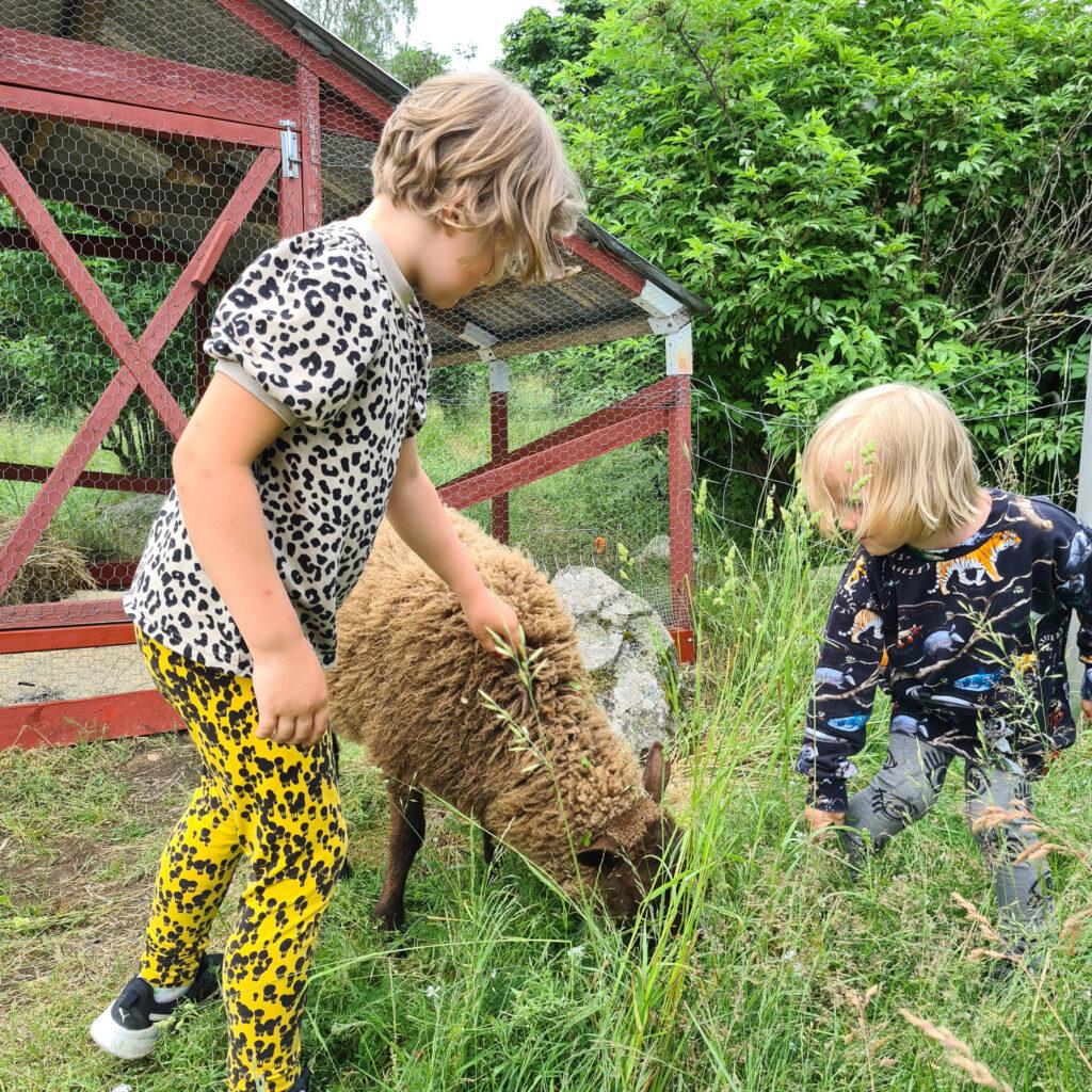 Lapset silittämässä lammasta