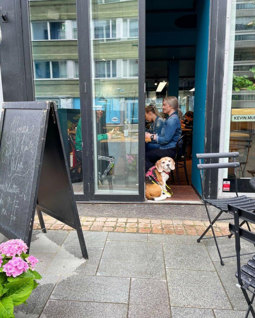 Koira kahvilan ovensuussa